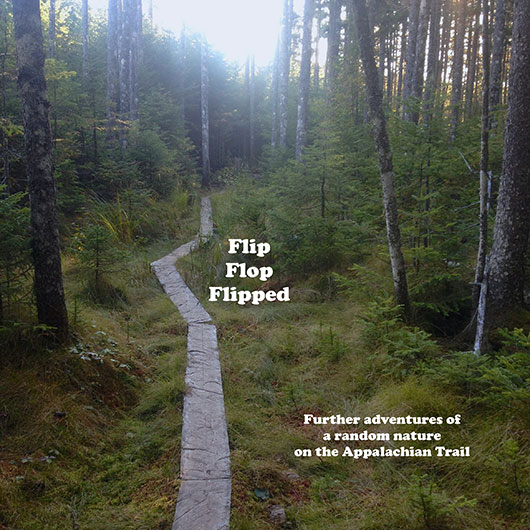 Flip Flop Flipped